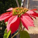 Fleur locale dans le parc de Kirindy